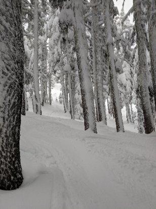 Mt. Hood Meadows - stellar conditions Monday 12/24 - © CKARDASNW