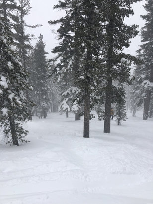 Beaver Creek - Yesterday was one of the premiere dates. The powder on the shoulders was better than the virgin the day prior.   - © Owner's iPhone