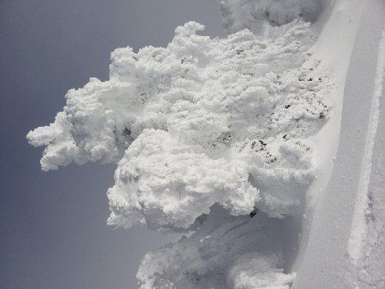 "Mt. Spokane Ski and Snowboard Park - Amazing snowghosts on 1/23 with 12"" of fresh powder. - © Amanda Proctor"