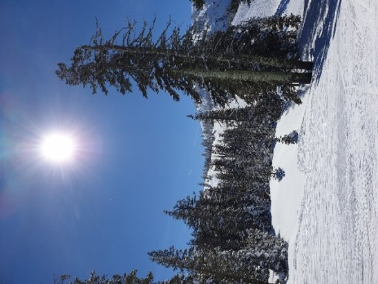 Sugar Bowl Resort - what a wonderful day. perfect weather. excellent snow. little or no waiting in line. - © Phil