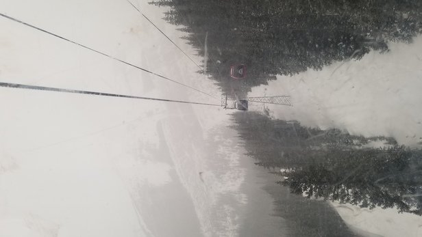 Sunshine Village - Vis is down, lighting is flat/grey with falling snow but the snow on the hill is amazing - © Anonymous