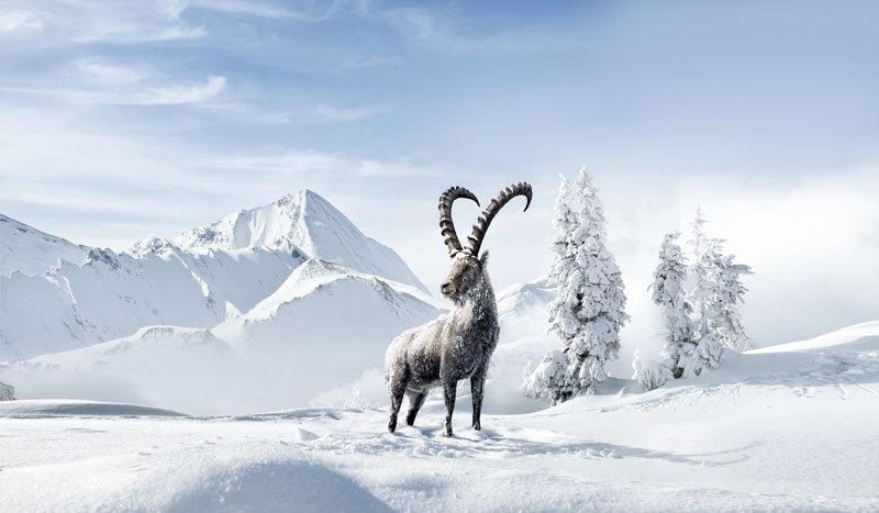 Graubünden ist Heimat der Steinböcke - © Graubünden Ferien