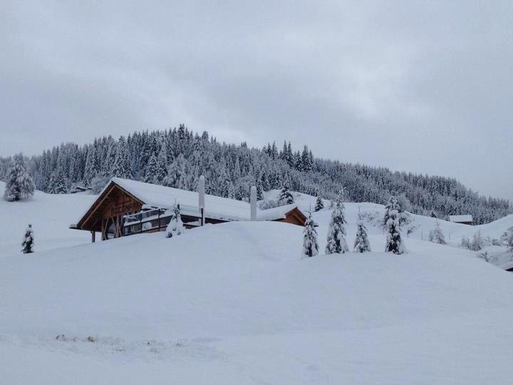 Thick layer of powder in Alta Badia, Italy. Nov. 29, 2012