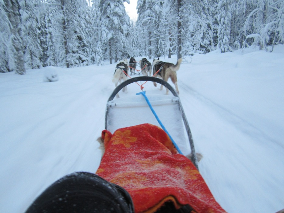 Dog sledding in Lapland - © Patrick Thorne