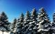 Lots of snow on the trees at Shanty Creek. - © Shanty Creek