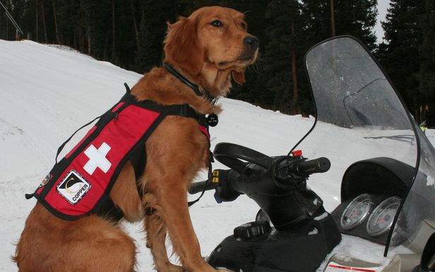 A rescue dog on a snowmobile at Copper, CO.