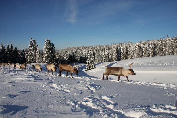 Tour du monde hivernal sans quitter le Doubs...- ©Gilles Malloire