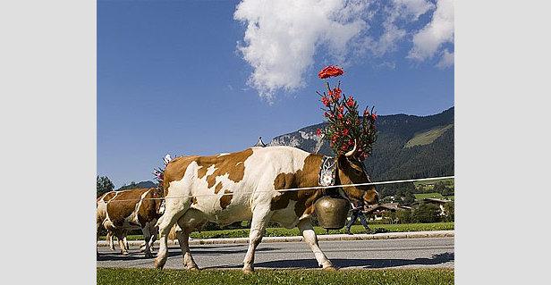 30 Jahre Almabtrieb in Söll am 19. September
