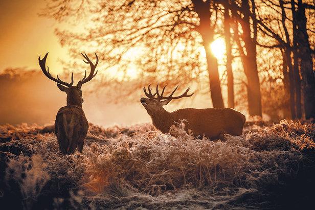 Autunno in Trentino per ascoltare il bramito del cervo in amore