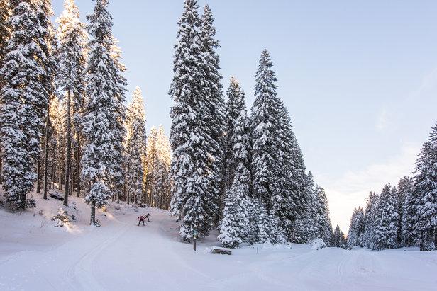 Langlaufen in Slovenië.  - © Iztok Medja