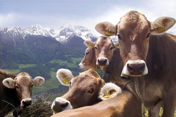 Dolina Vinschgau, Val Venosta  - © IDM Südtirol Ralf Kreuels