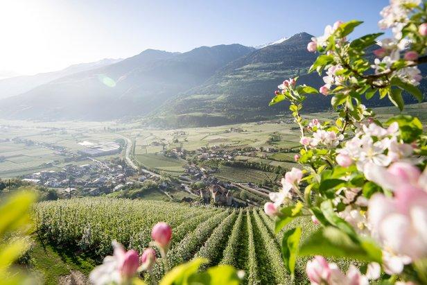 Vinschgau / Val Venosta  - © IDM Südtirol, Alex Filz
