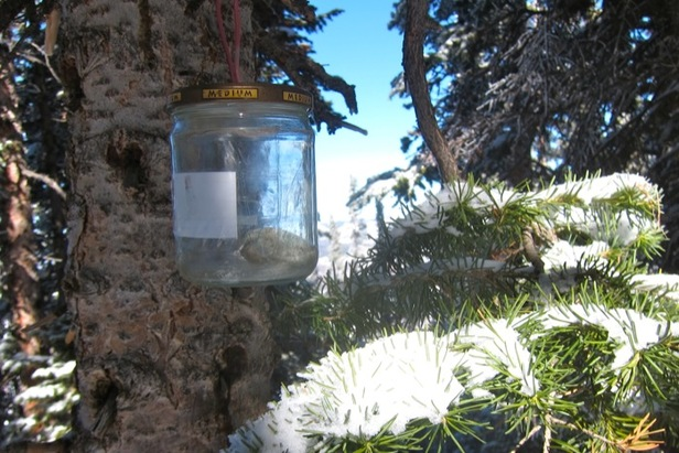 Aspen/Snowmass Tree Shrines: John Denver Shrine- ©Amanda Rae