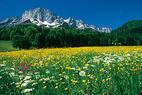 Bischofswiesen - ©Berchtesgadener Land