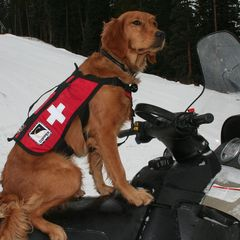 Videos: Avalanche dogs to the rescue - ©Copper/CO
