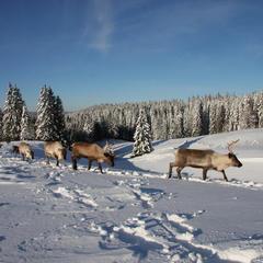 Tour du monde hivernal sans quitter le Doubs... - ©Gilles Malloire
