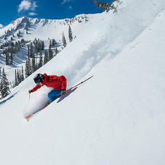 Bluebird powder at Snowbird, Utah - © Snowbird Ski Resort | Scott Markewitz